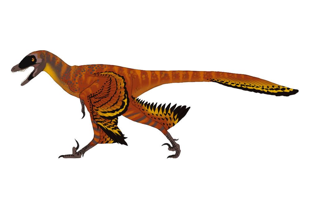 Premise Indicator Words: Top 8 Dromaeosaurid