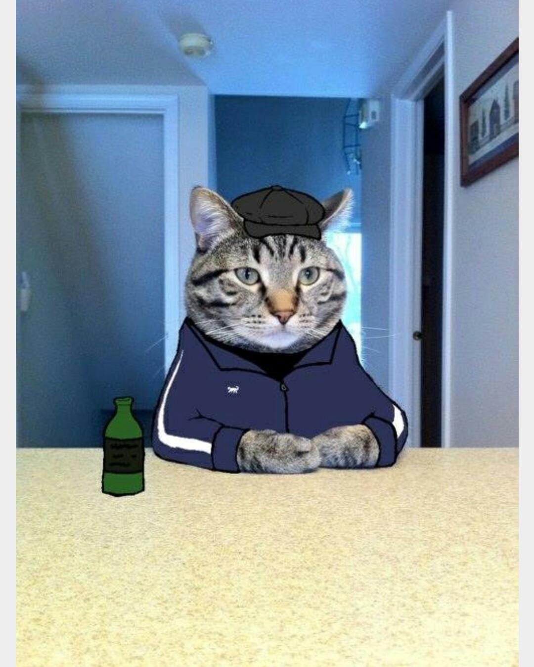 cat behaviorist orange county ca