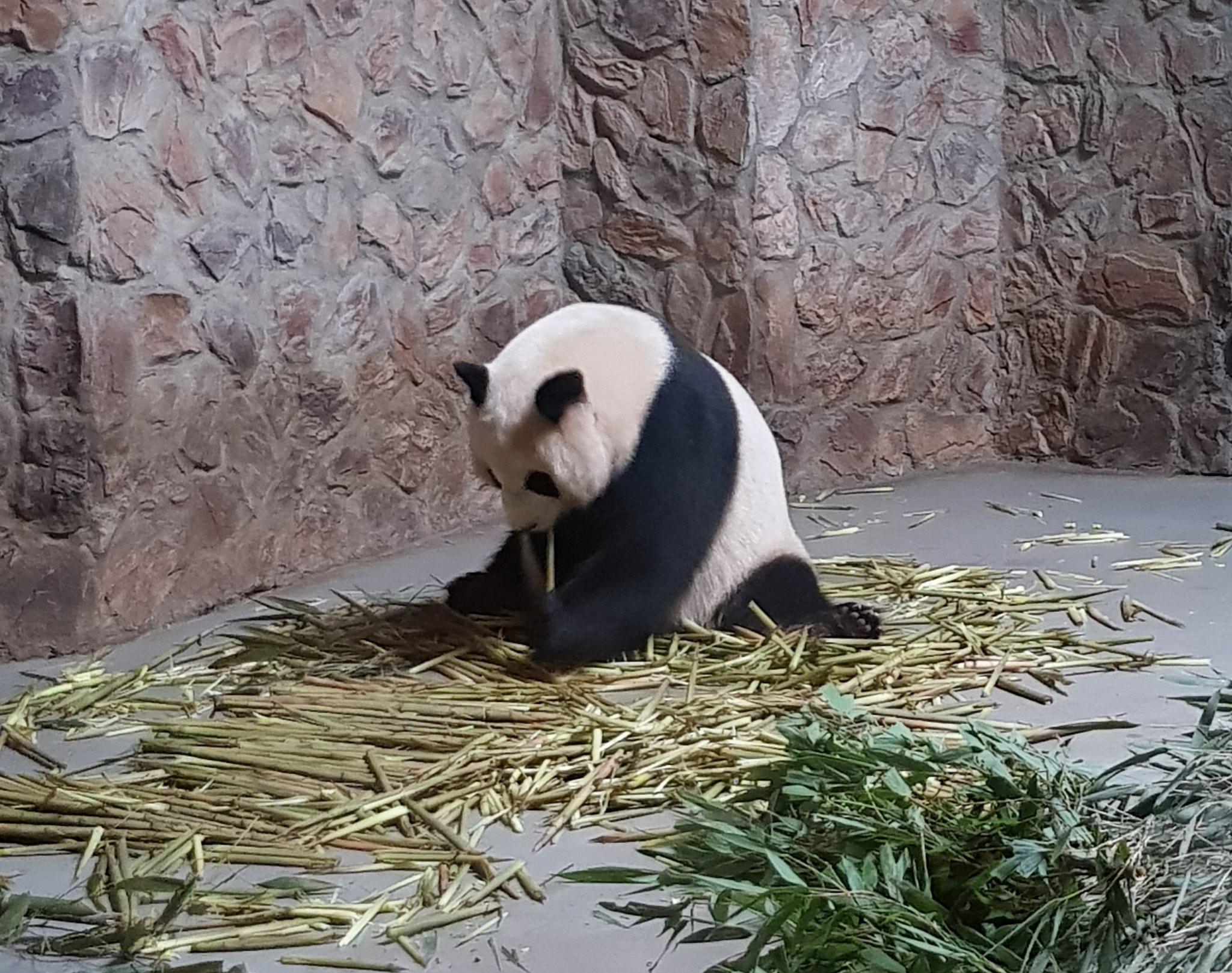 Image result for sad panda