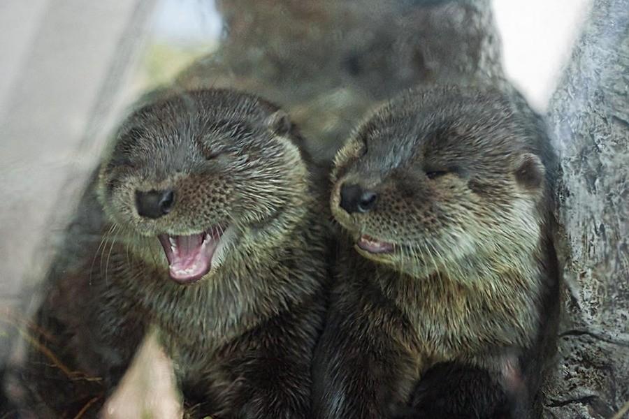 An Otter joke!