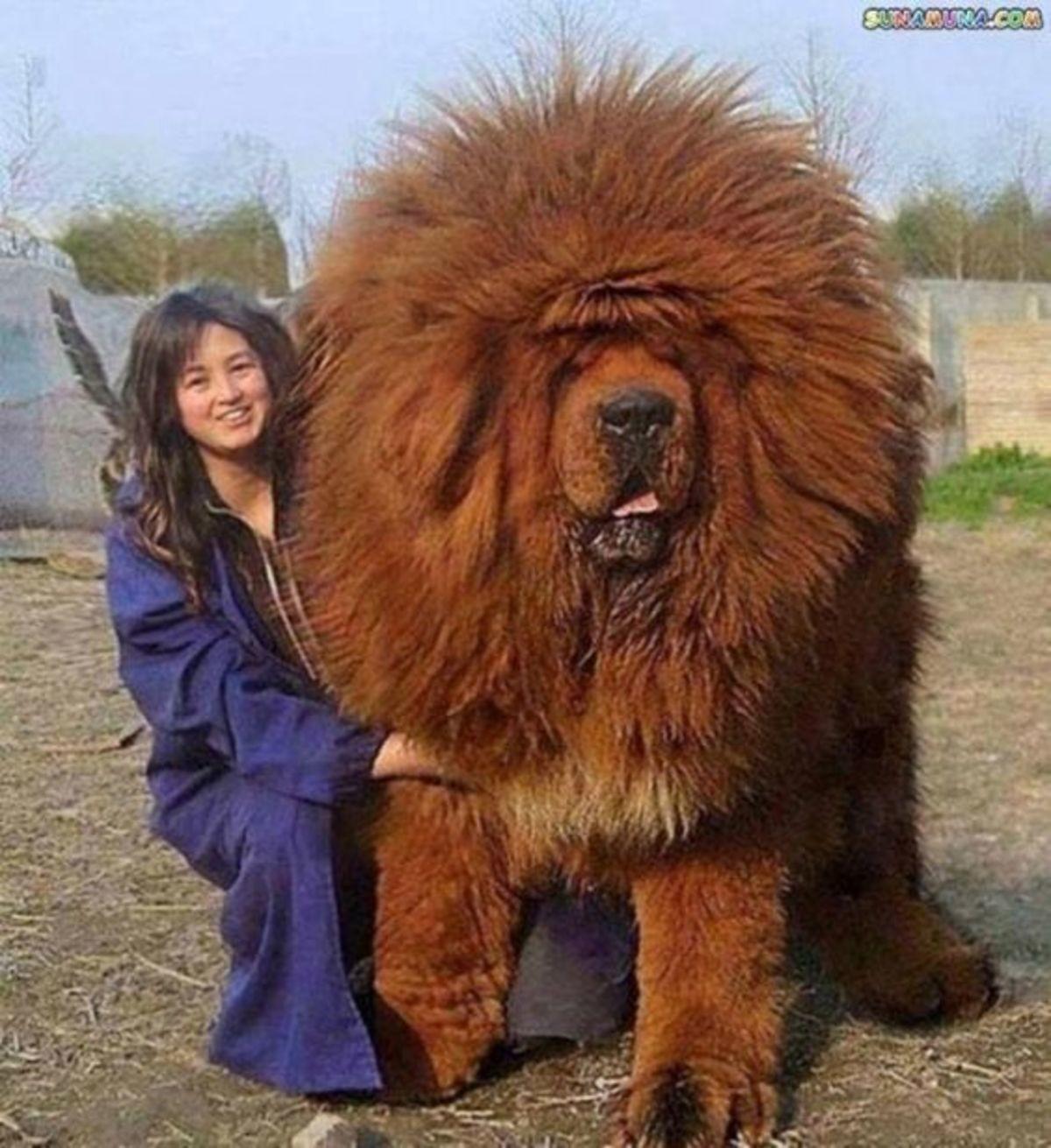 663777799d8 Big Dog
