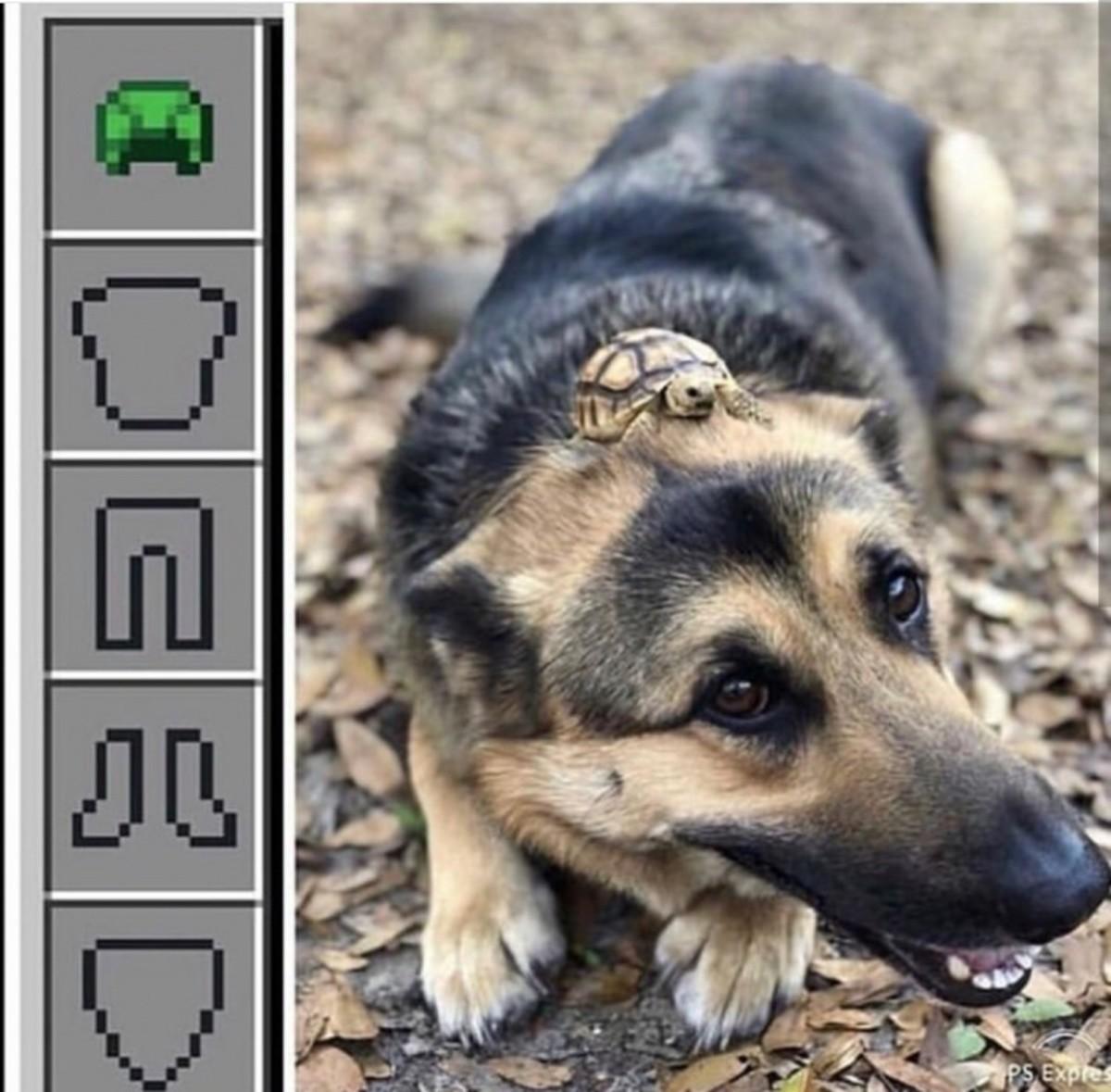 Cute armor doggo