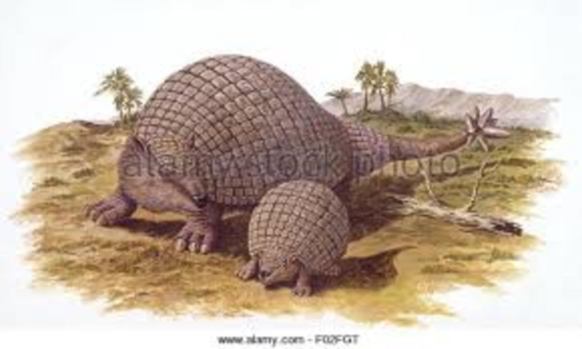 Doedicurus clavicaudatus