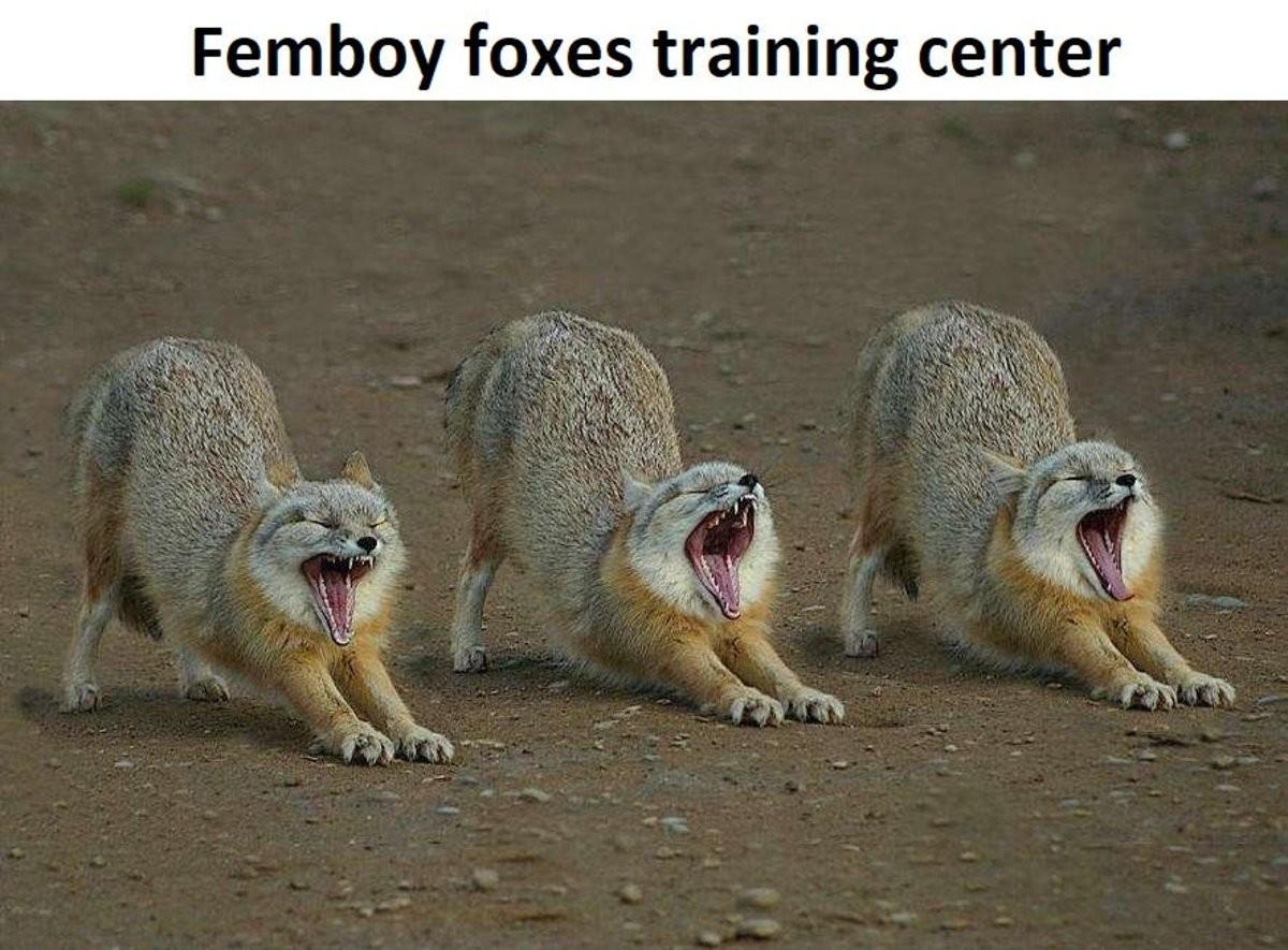Femboy Training