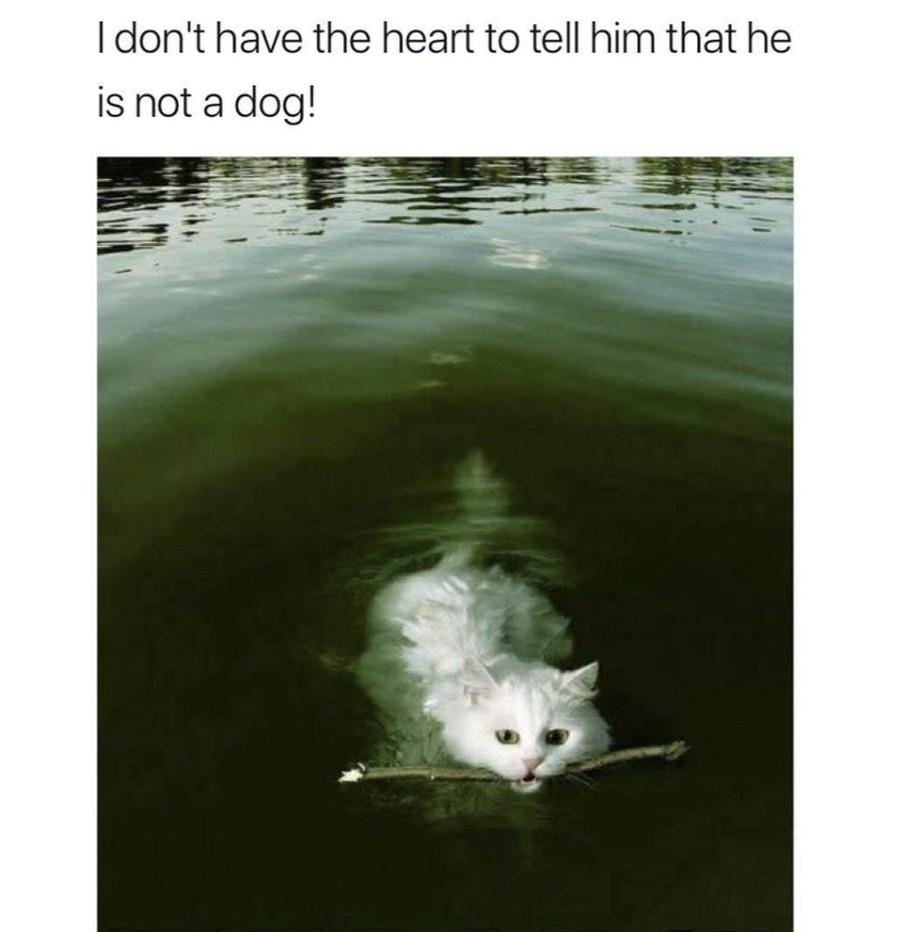 Meme Ramen