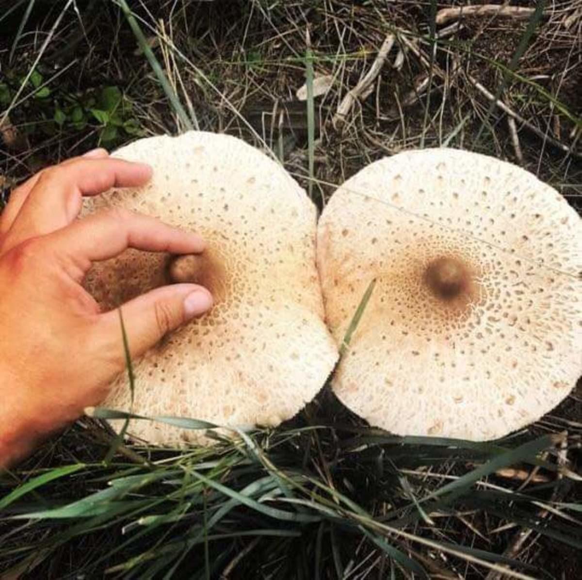 Картинки по запросу гриб сиськи