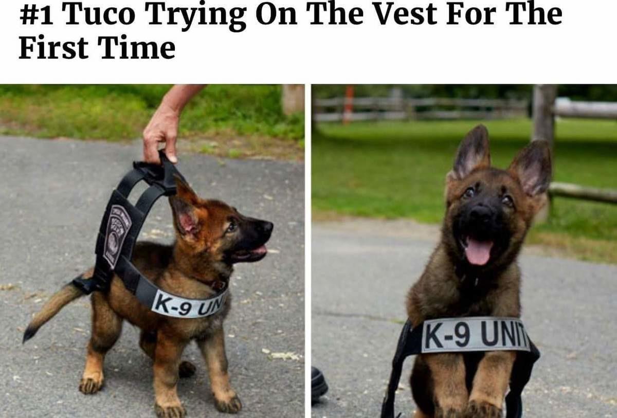 reposts) Doggo Comp: Service Dogs