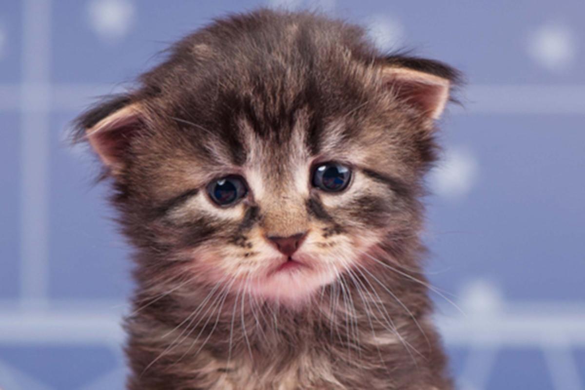 маркову картинка плачущего котенка захотите