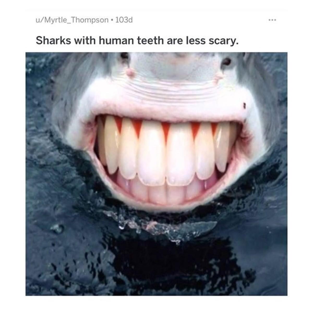 Shark With Human Teeth