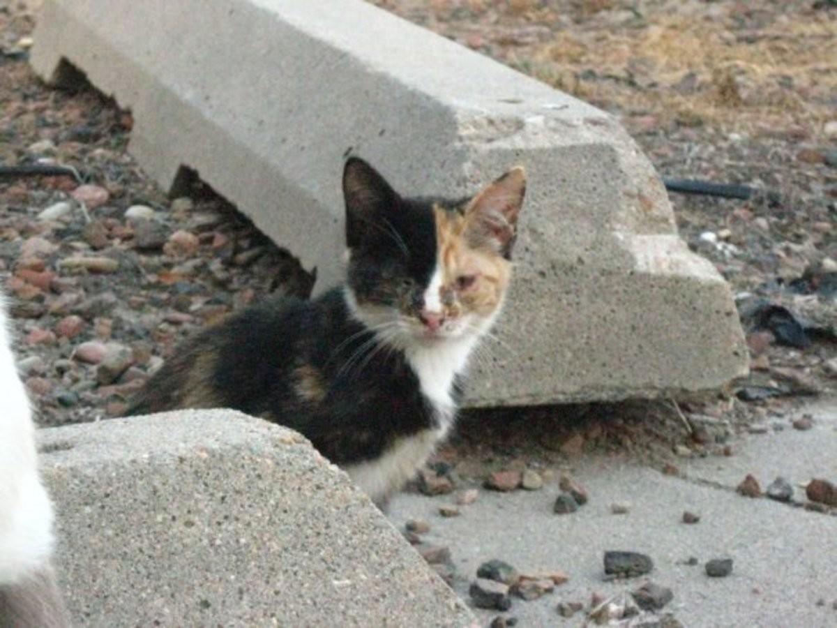 Wholesome cat rescue